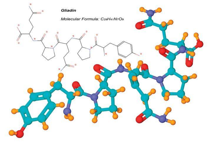 Gliadin Gluten
